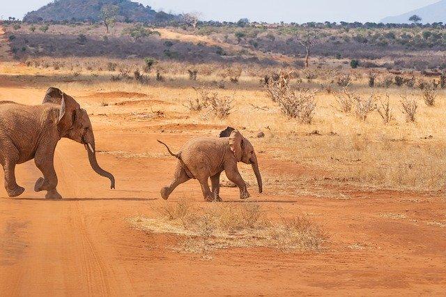 Safariurlaub in Kenia mit Badeurlaub